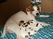 Kennel DANASA's Kelley - Winther's Jip litter