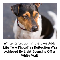 White reflection in eyes adds life to a photo